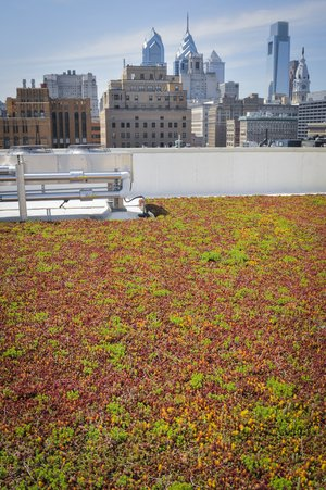 901_Walnut_Green_Roof-3838.jpg