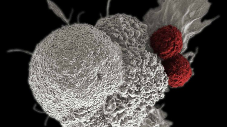 aamc-news-article-header-immunotherapy.jpg