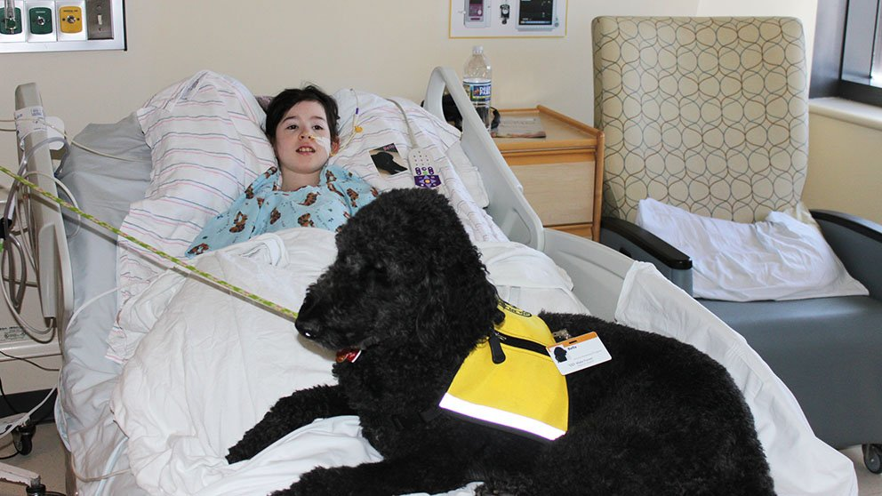 Child in hospittal bed with therapy dog sitting a the foot of the bed